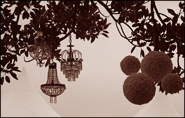 chandeliers hanging from trees