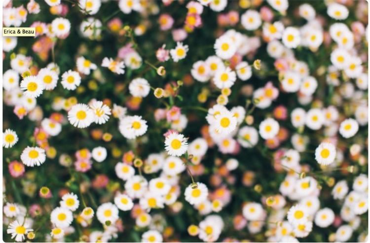 cute flowers